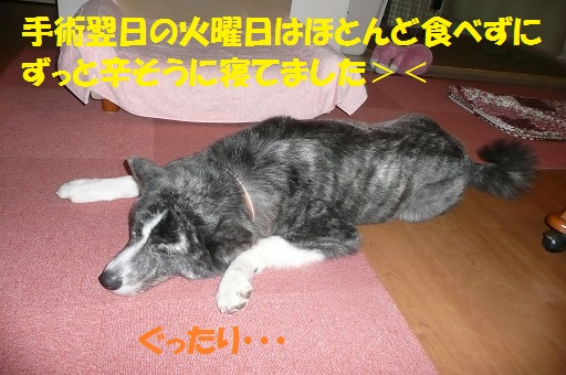 f0121712_16292917.jpg