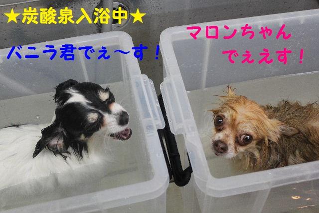 b0130018_0442195.jpg
