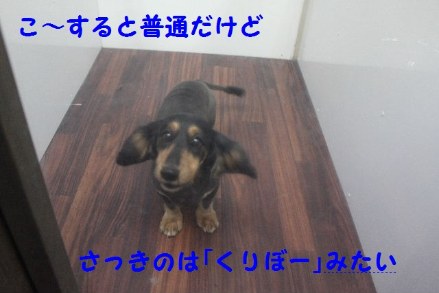 b0130018_0511632.jpg