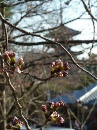 3月27日(金)_b0121719_16414070.jpg