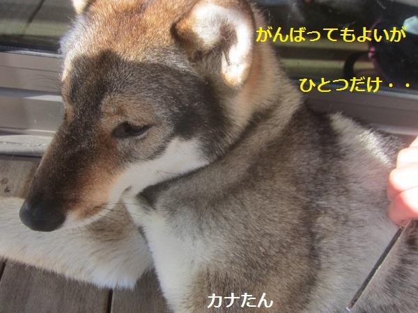 f0143123_9195011.jpg