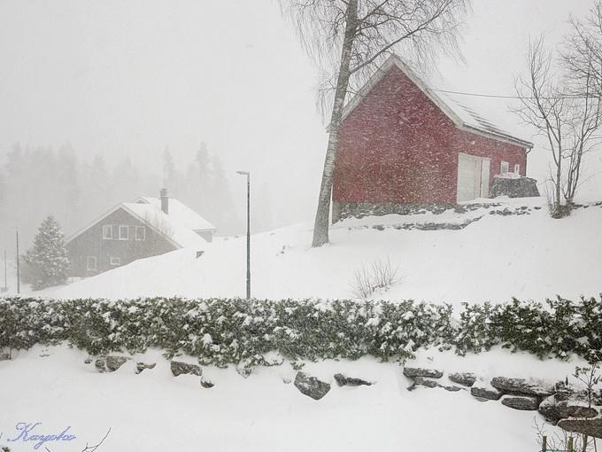 春の雪_a0086828_4545515.jpg