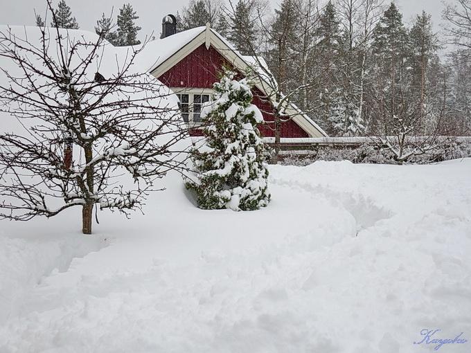 春の雪_a0086828_53964.jpg