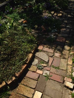 芦屋 Feuさんの お庭_f0150936_8402915.jpg
