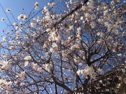 一番美しい季節。〜魂に栄養を(^^)〜_b0298740_23395959.jpg