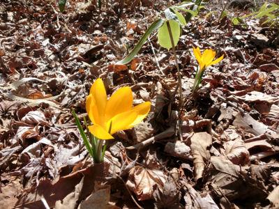 春二番_f0019247_23255433.jpg