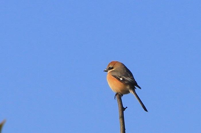 鳥 いろいろ_c0155950_12253981.jpg