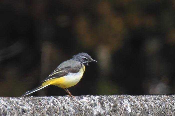 鳥 いろいろ_c0155950_12262964.jpg