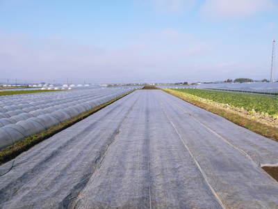 有機栽培の水田ごぼう ごぼうの成長_a0254656_18374366.jpg