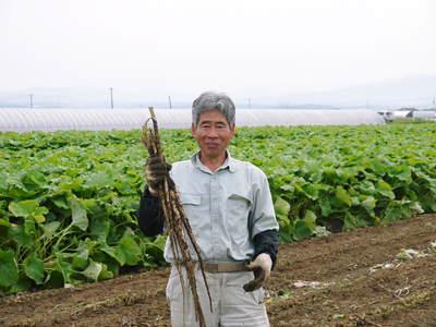 有機栽培の水田ごぼう ごぼうの成長_a0254656_1882233.jpg
