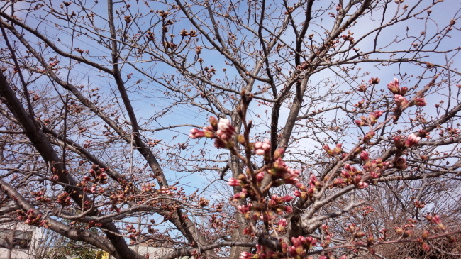 ゆう君とゆずの春休み_a0201257_17344793.jpg