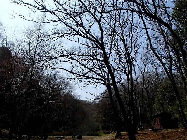 森 と 林 が 好き_d0105967_09594426.jpg