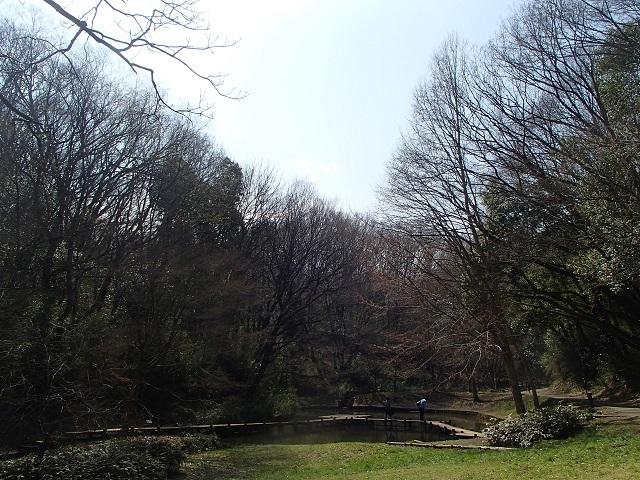 森 と 林 が 好き_d0105967_10003939.jpg