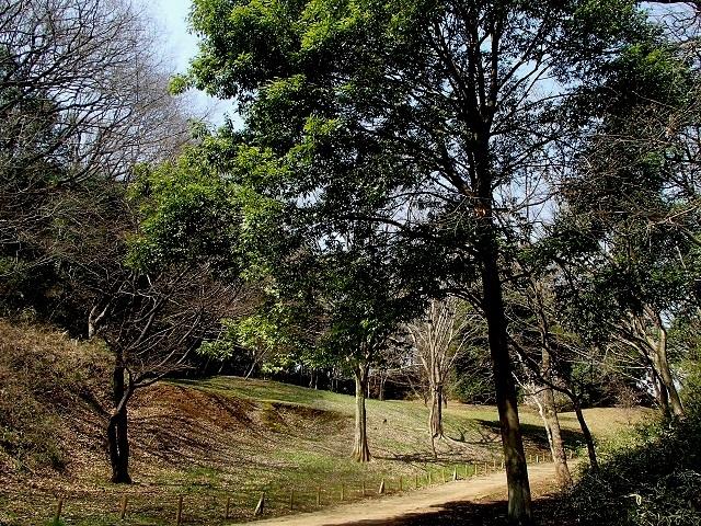 森 と 林 が 好き_d0105967_10011254.jpg