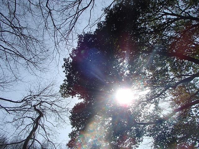 森 と 林 が 好き_d0105967_10012251.jpg
