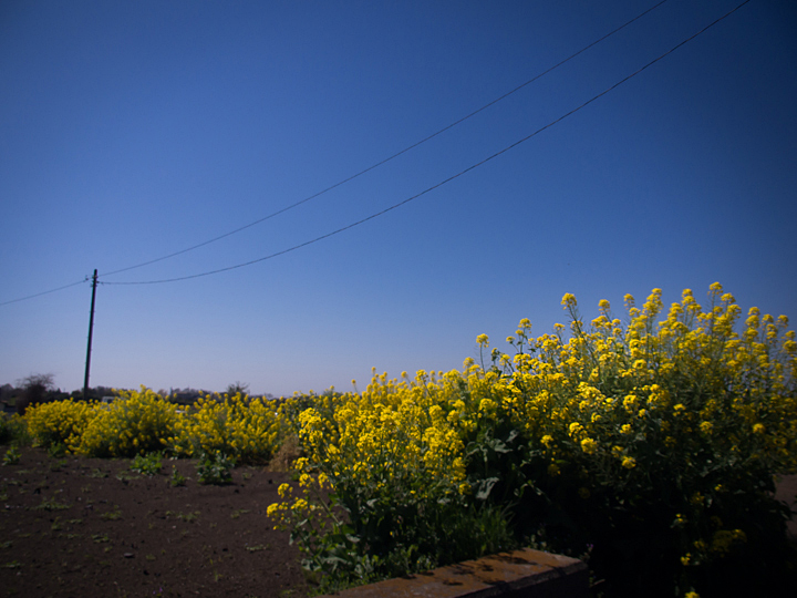 春色の畑。_b0022268_19392284.jpg