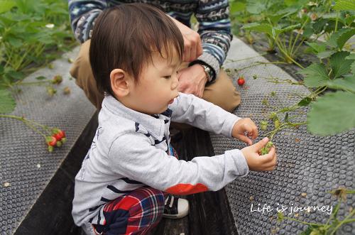 いちご狩り_e0298288_10102051.jpg