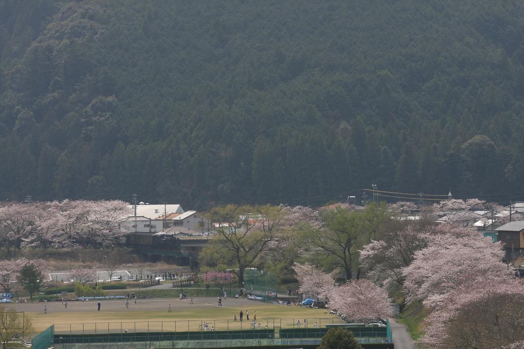 桜花と野球と杉花粉の季節 - 2014年・大井川鐵道 -  _b0190710_19334177.jpg