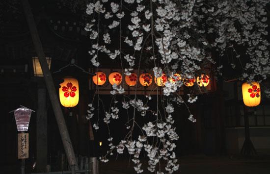 平野神社 魁さくら 2015桜だより6_e0048413_22104141.jpg