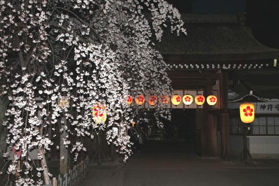 平野神社 魁さくら 2015桜だより6_e0048413_2211011.jpg