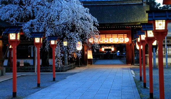 平野神社 魁さくら 2015桜だより6_e0048413_2294997.jpg