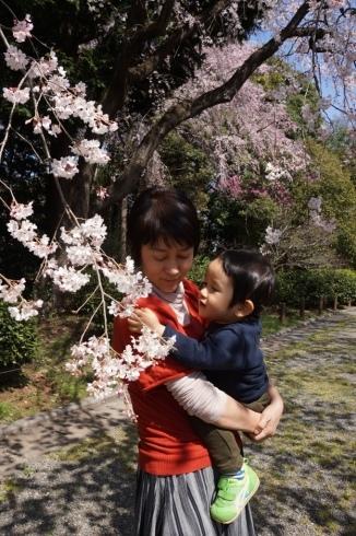 With Sakura @ Jindai Botanical Garden_f0006713_22495493.jpg