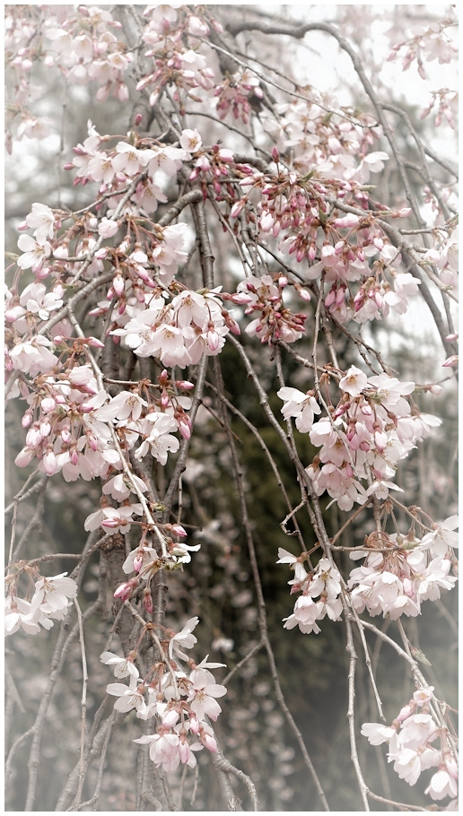 春待ち通信 #017_f0302613_17061662.jpg