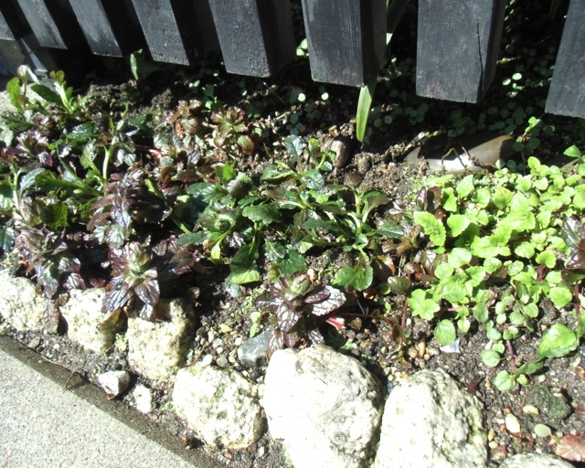 植物たちは_b0181015_0153684.jpg