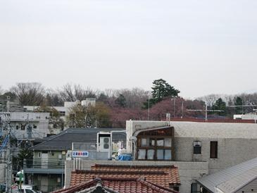今日は桜の下で写真撮影会_b0255217_10453657.jpg