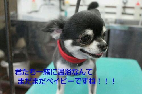 b0130018_0153957.jpg