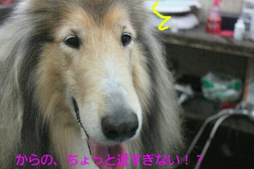b0130018_022471.jpg