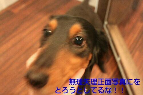 b0130018_0253847.jpg
