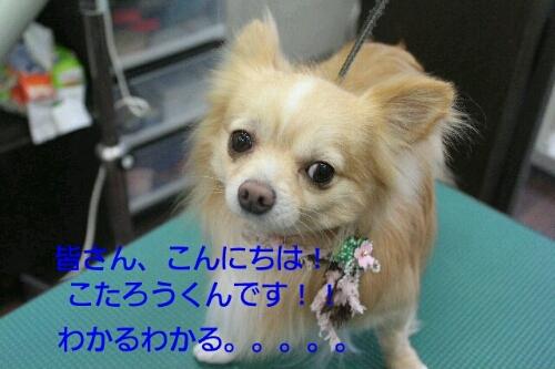 b0130018_0305118.jpg