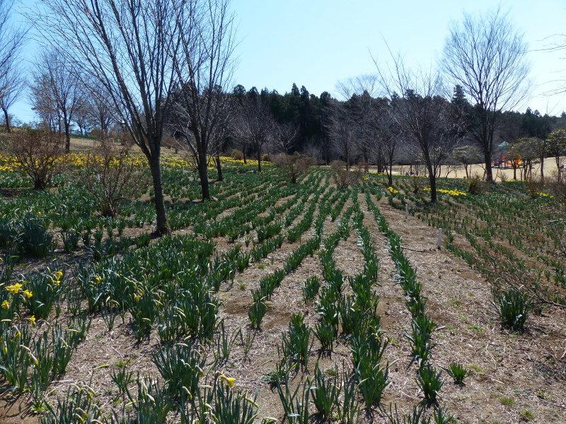 東那須野公園_a0288621_00151067.jpg