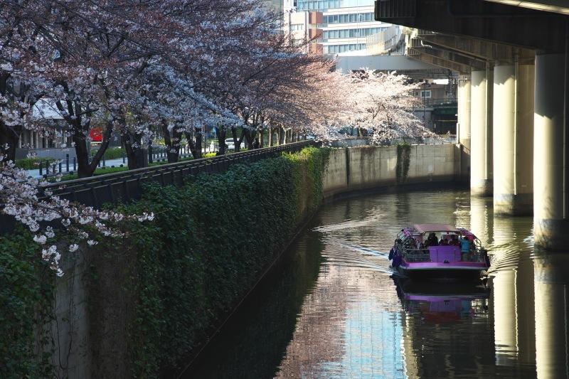 SAKURA  ・・・都心の桜・・・_f0333031_20534564.jpg