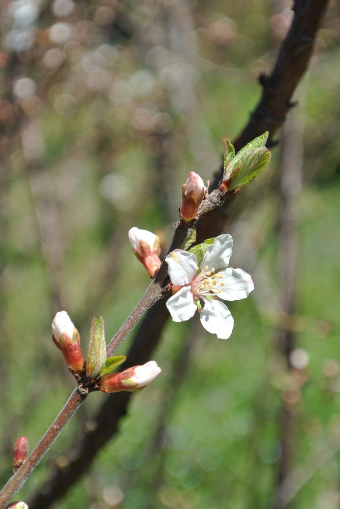春の花いろいろ_e0089232_14215951.jpg