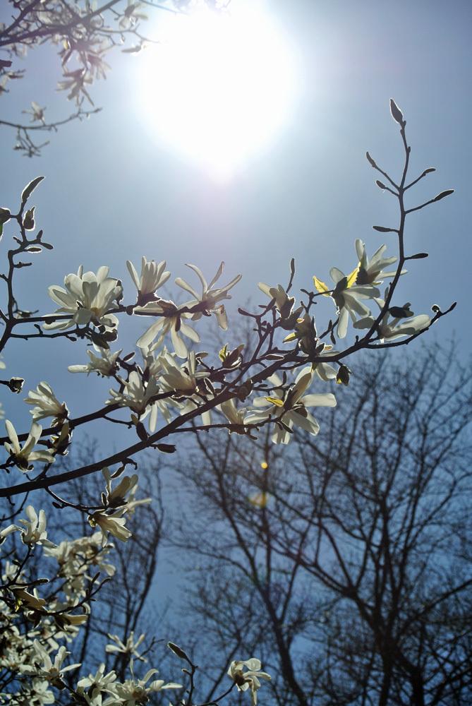 春の花いろいろ_e0089232_14235005.jpg