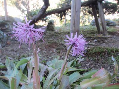 春を待つ庭園_f0289632_22155518.jpg