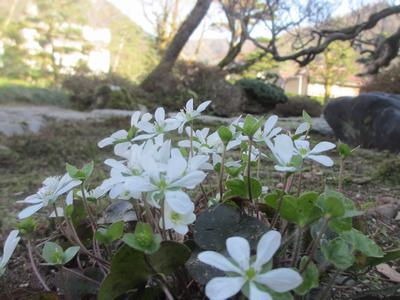 春を待つ庭園_f0289632_22161872.jpg