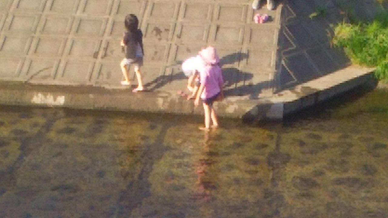 野川カワセミ日記(2015/03/28)カワセミなし)_c0338136_23085675.jpg