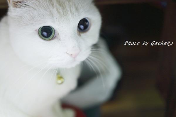 猫のさがし物は…_e0241944_23532731.jpg