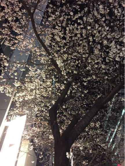凍狂の桜…(3月27の出来事)_b0136045_934546.jpg