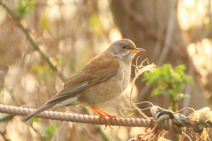 鳥 いろいろ_c0155950_22444059.jpg