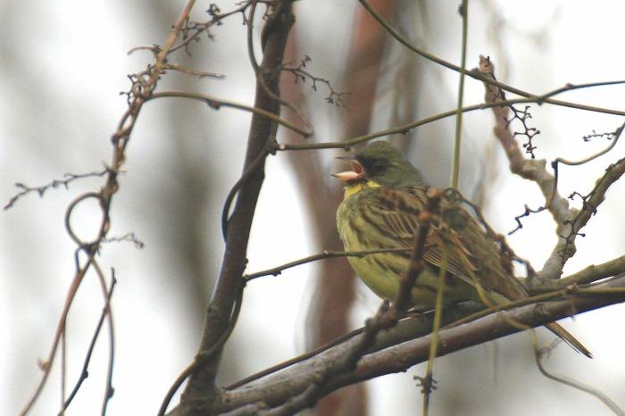 鳥 いろいろ_c0155950_2246940.jpg