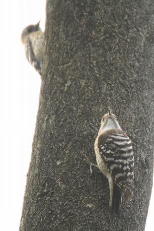 鳥 いろいろ_c0155950_22482913.jpg