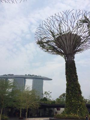 シンガポール!_e0163255_20273753.jpg