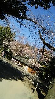 愛宕神社の出世の石段を登りました。_f0008555_19271560.jpg