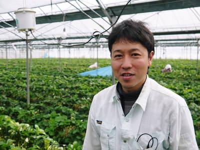 熊本イチゴ『さがほのか』 ビニールを曇らせて日焼けを防ぎ、高品質のイチゴを育てます_a0254656_17222986.jpg