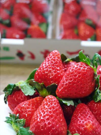熊本イチゴ『さがほのか』 ビニールを曇らせて日焼けを防ぎ、高品質のイチゴを育てます_a0254656_18134556.jpg