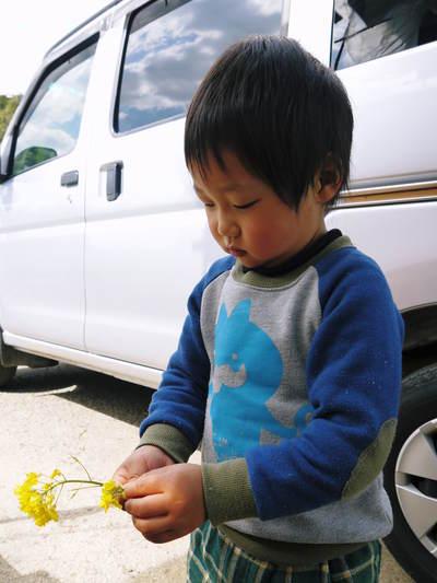 熊本イチゴ『さがほのか』 ビニールを曇らせて日焼けを防ぎ、高品質のイチゴを育てます_a0254656_184167.jpg
